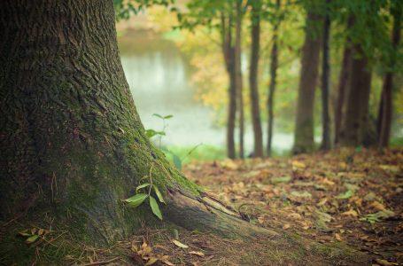 Trzy tysiące nowych drzew w Rzeszowie